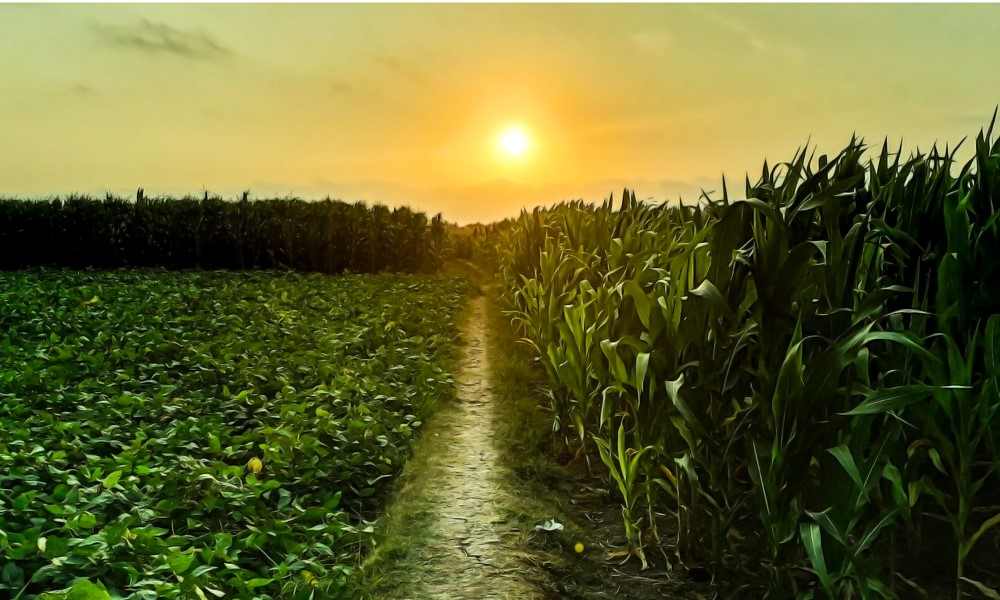 Spring planting 2021: What's ahead for corn and soybeans?
