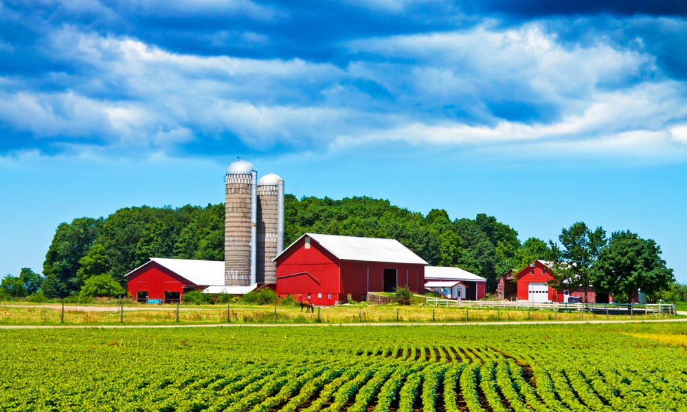 Rent or buy farmland: Which is best for your operation?