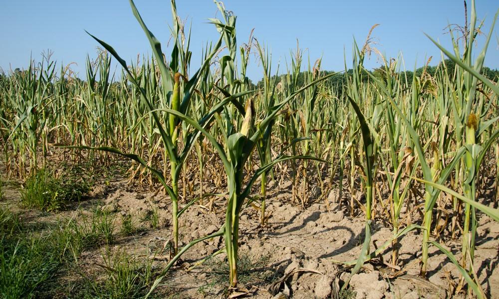Will widespread drought threaten yields in 2021?